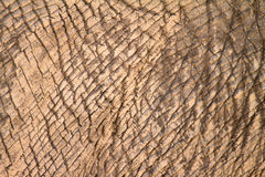 Elephant skin Stock Photos