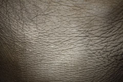 Free Elephant Skin Royalty Free Stock Photo - 18944625