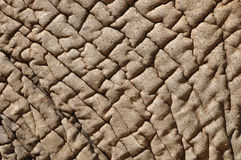 Elephant skin. Close up of an Elephant skin. Can be used for the concept of dry skin Royalty Free Stock Image