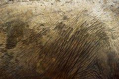 Elephant skin Royalty Free Stock Photos