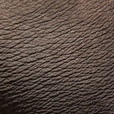 Elephant skin. Texture or background Royalty Free Stock Photography