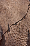 Elephant skin Royalty Free Stock Images