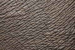 Free Elephant Skin Stock Photo - 26231200