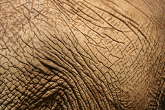 Elephant Skin 3 Royalty Free Stock Photo