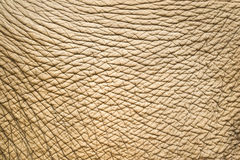Free Elephant Skin Royalty Free Stock Photos - 39383148
