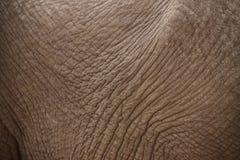 Elephant_skin Images libres de droits