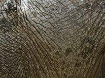 Elephant skin. Close-up on dry elephant skin Stock Photos
