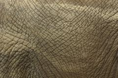 Elephant Skin. Closeup of wrinkled elephant skin Stock Photo