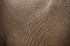 Elephant_skin. Skin of an african elephant Royalty Free Stock Images