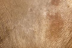 Elephant skin background Stock Image
