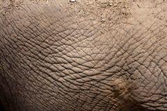 Elephant skin background Stock Photo