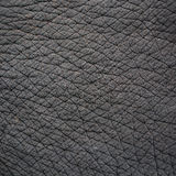 Elephant skin Royalty Free Stock Image