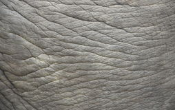 Elephant skin. Stock Photography