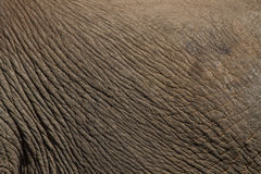 Elephant skin. Stock Photo