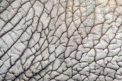 Elephant skin nature pattern Royalty Free Stock Images