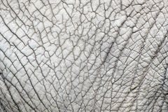 Elephant skin nature pattern Royalty Free Stock Photos