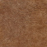 Elephant skin seamless natural texture Stock Images