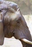 Elephant Skin Texture Royalty Free Stock Image