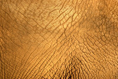 Elephant skin texture Royalty Free Stock Photo
