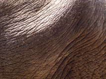Elephant skin,texture Royalty Free Stock Photos