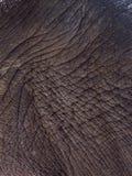 Elephant skin, texture Stock Photo