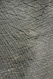 Elephant skin texture. Close up rough texture of an elephant's body Royalty Free Stock Photography