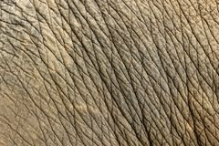 Free Elephant Skin Texture Background Royalty Free Stock Photo - 107611825