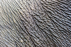 Elephant skin texture Royalty Free Stock Photography