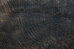 Elephant skin texture. Black and white or background stock images