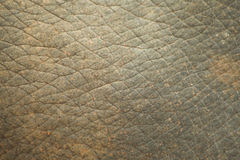 Elephant skin texture Royalty Free Stock Photos