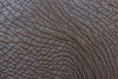 Elephant skin texture 1 Royalty Free Stock Photos