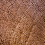 Elephant skin texture Stock Photography