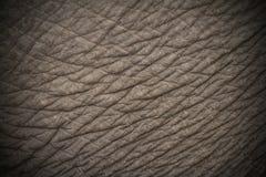 Elephant skin texture stock photos