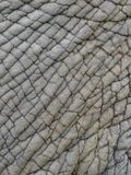 Close up of elephant's skin showing textures, patterns and lines. Elephant's skin showing deep lines, randomness of lines, textures Royalty Free Stock Photography