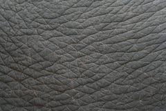 Elephant skin textured,Thailand Royalty Free Stock Photos