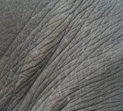 Elephant skin textured,Thailand Stock Photo