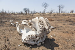 Elephant skull Royalty Free Stock Photography