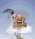 Elephant in the sky on a nest with an umbrella. Royalty Free Stock Photography