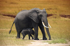 Elephant with a small baby in Amboseli Royalty Free Stock Photography