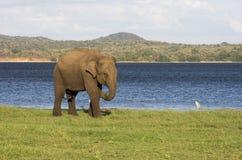 Elephant and small bird royalty free stock photo