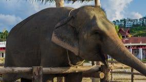 Elephant smile stock images