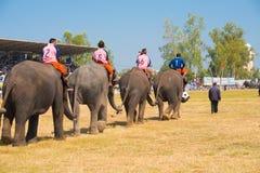 Elephant Soccer Team Entering Stock Photos