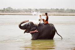 Elephant spalshing female tourist, Nepal. A female tourist receiving a splash of water in her face while washing a Nepalese laughing elephant with a local guide stock photo