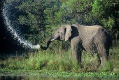 Elephant splash Royalty Free Stock Photography