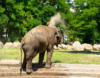 Elephant splashing Royalty Free Stock Photo