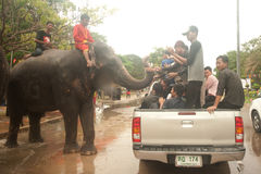 Elephant splashing water in Songkran day in Thailand. Royalty Free Stock Image