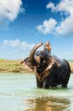 Elephant splashing water while taking bath in Chitwan National park, Nepal Stock Images