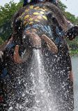 Elephant spray water during Songkran. Festival in Ayutthaya province on April 11, 2018 Stock Photos