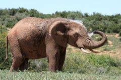 Elephant spraying water Stock Photos