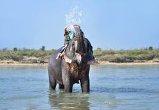 Elephant spraying water to people during riding Stock Image